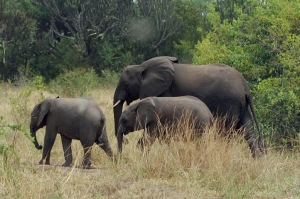 23July-Safari-Elephants (12)