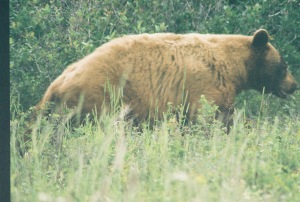 bear.glacier.2004
